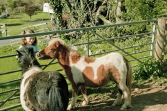 parkers_farm_Holiday_Park_images004