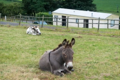 parkers_farm_Holiday_Park_images023
