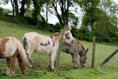 parkers_farm_Holiday_Park_images029
