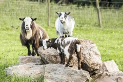 parkers_farm_Holiday_Park_images043