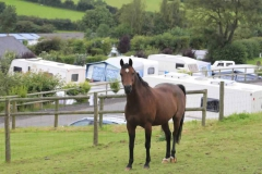 parkers_farm_Holiday_Park_images047