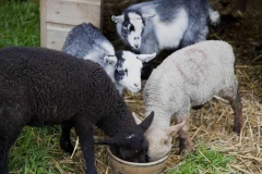 parkers_farm_Holiday_Park_images051